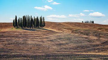 Toscane van Manjik Pictures