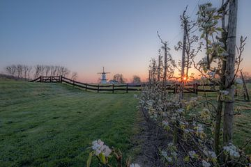 Prachtige zonsopkomst bij molen de Vlinder van Moetwil en van Dijk - Fotografie