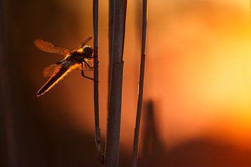 Dragonfly sur Pim Leijen