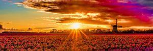 zonsopkomst boven een bollenveld