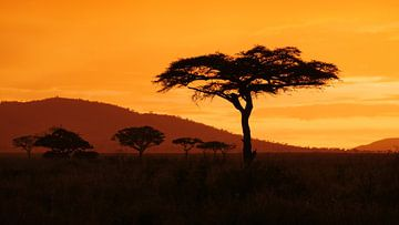 Zonsondergang in Afrika op de savanne in Tanzania van Robin Jongerden