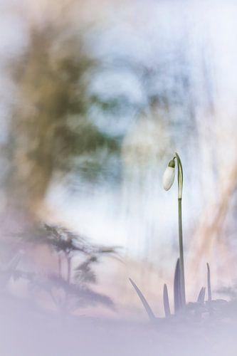 Eternity van Bob Daalder