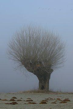 Kopfweide im Nebel am Niederrhein wird von Wildgänsen überflogen von wunderbare Erde