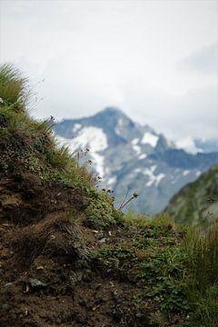Fleurs alpines et montagne alpine sur Marije Zwart