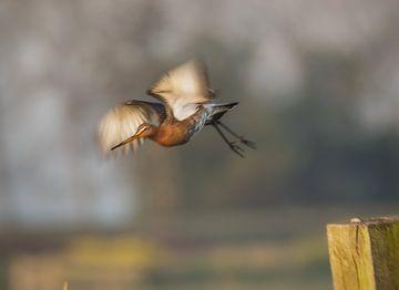 Grutto wegvliegend van natascha verbij