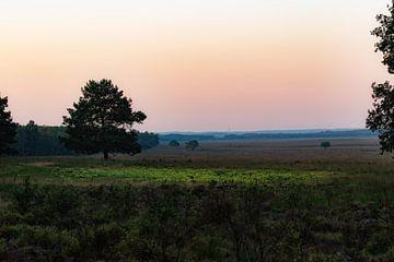 Morgens über dem Moor von Tania Perneel