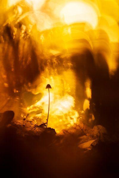 Warm yellow light van Bob Daalder