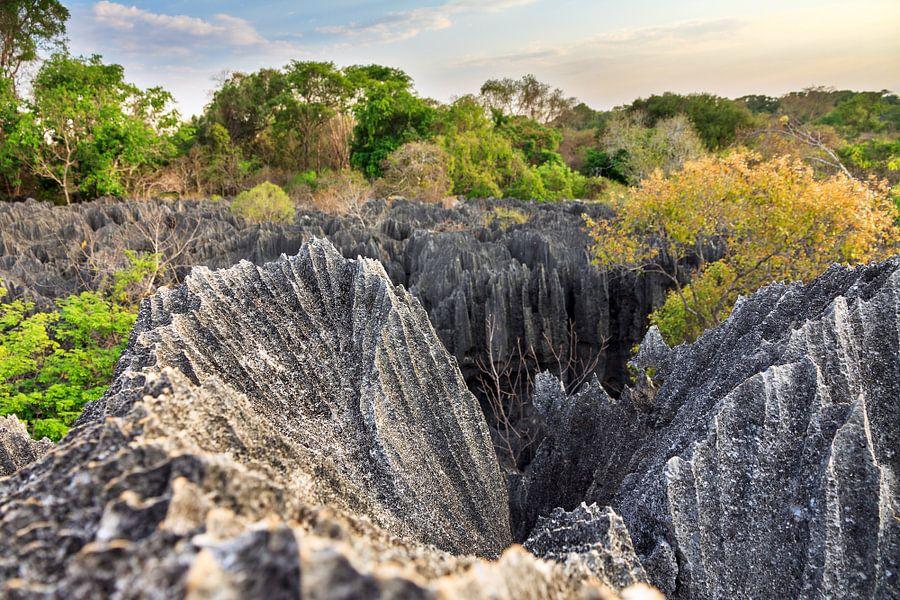 Tsingy rotsen in het landschap