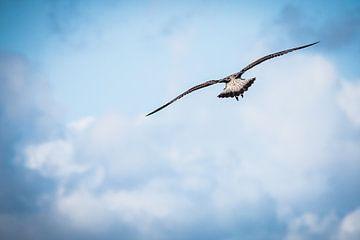 Vrijheid ....... van Fotografie Jeronimo