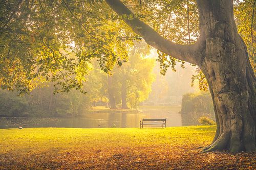 Wilhelminapark, Utrecht Oost van Alessia Peviani