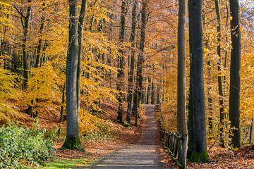 Herfst in het Sonsbeekpark Arnhem van Armin Palavra