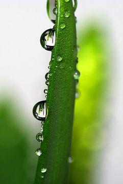 Raindrops sur Marlies Prieckaerts