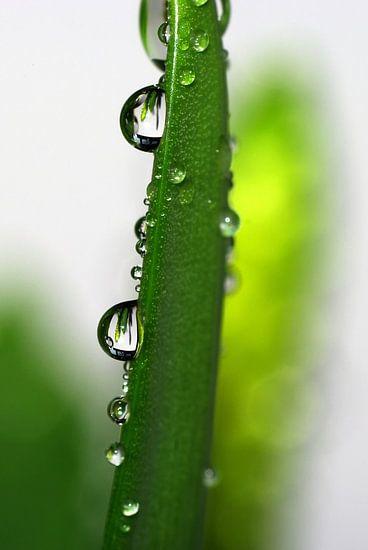 Raindrops van Marlies Prieckaerts
