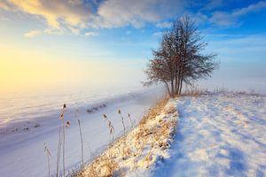 Mistig winterlandschap met boom tijdens zonsondergang van