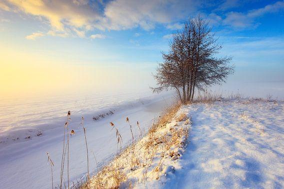 Mistig winterlandschap met boom tijdens zonsondergang