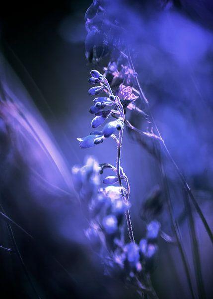 RED SPANGLES no3C-Blue van Pia Schneider