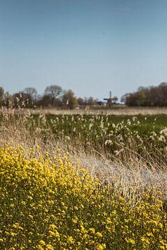Blühender Raps, eine Windmühle und blauer Himmel von Kristian Oosterveen