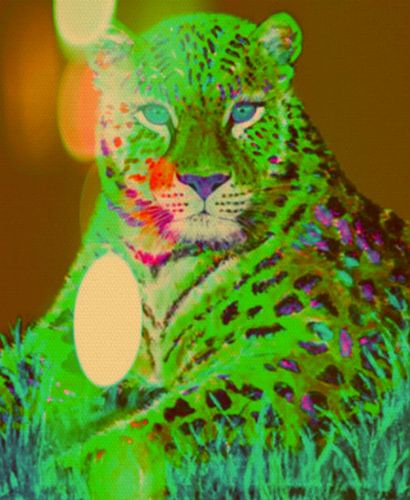 Little lion boy Pop Art PUR