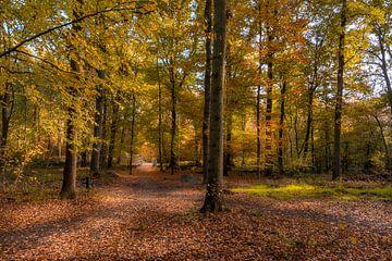 Herbst im Wald von John van de Gazelle