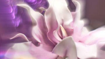 Dekorative Blume von Wim van Berlo
