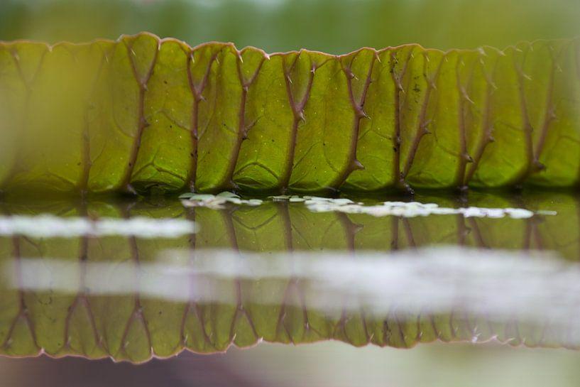 Blad van een groene waterlelie van Simone Meijer