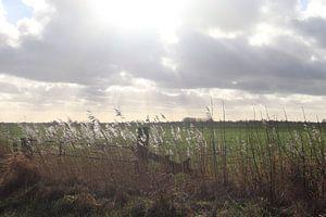 Mooie zonnestralen op het weiland van Eline Sijtsma