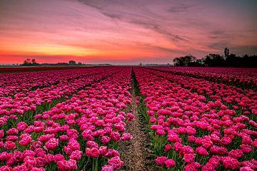 Roode tulpen van Peter Heins
