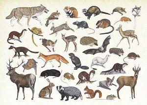 Zoogdieren van Nederland.