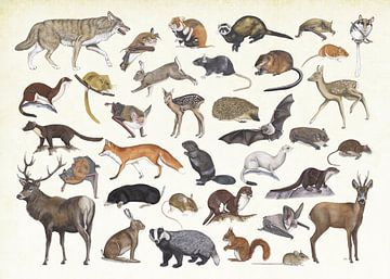Säugetiere der Niederlande. von Jasper de Ruiter