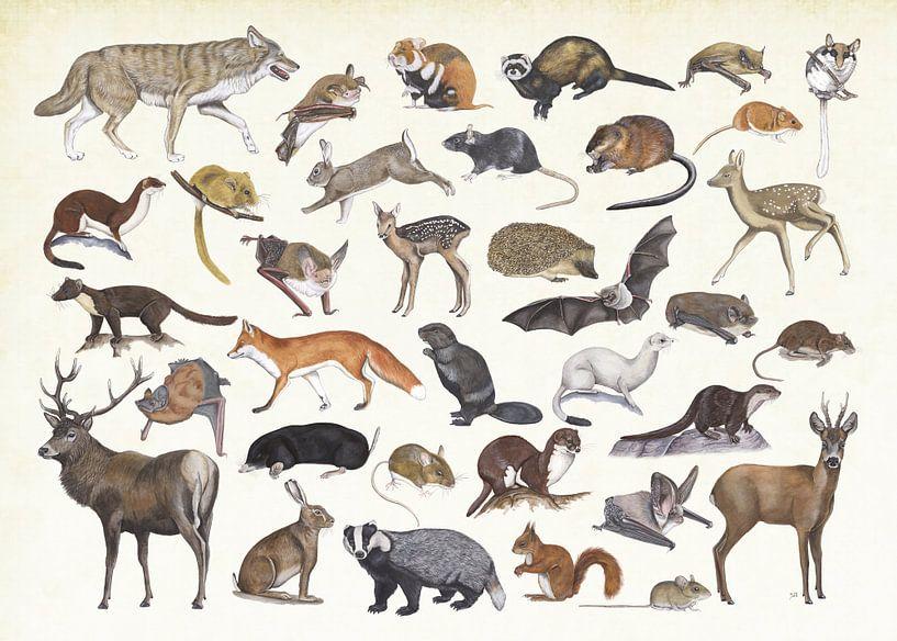 Zoogdieren van Nederland. van Jasper de Ruiter