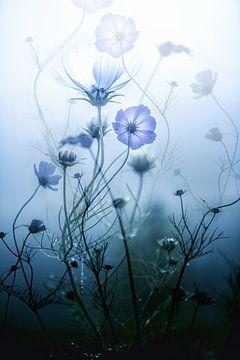 Misty Morning Mood van Mark Isarin | Fotografie