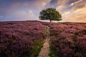 de paarse heuvel