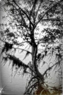 Pinhole boom 4008B/W van Rudy Umans