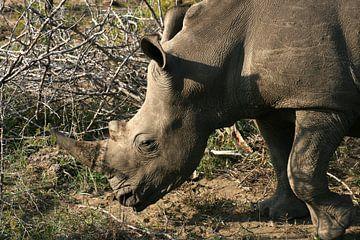 Witte neushoorn in Afrika van Sandra van Vugt