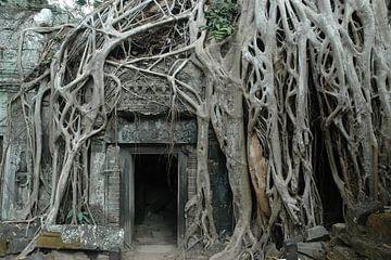 Der Dschungel hat den Ta-Prohm-Tempel in seiner Gewalt von Koolspix