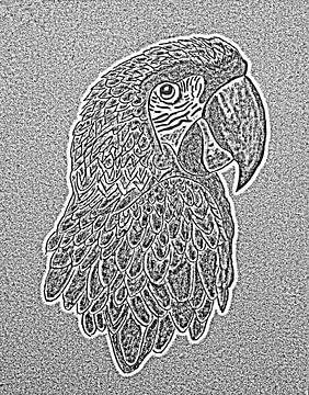 Papagei. von Jose Lok