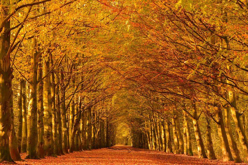 Boslaan in herfstkleuren van iPics Photography