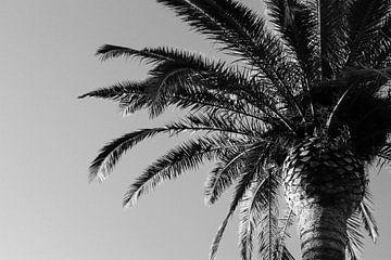 Schwarze Palme von Bart Houtman