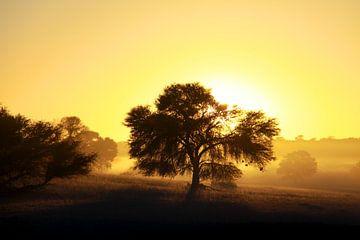 Kalahari Sunset van Guus Quaedvlieg