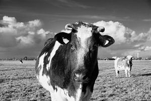 Een zwart&witte dame met horens