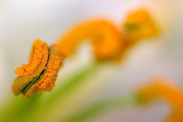 Orange and Green 2 von Marlies Prieckaerts