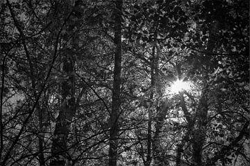 zon door bomen von Marcel van der Kolk