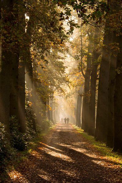 Ochtend wandeling van Birgitte Bergman
