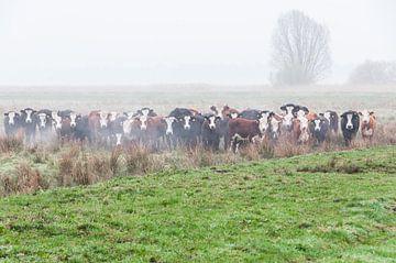 Koeien familie portret van Richard Janssen