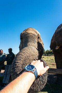 Wees olifant 2 van Pepijn van der Putten
