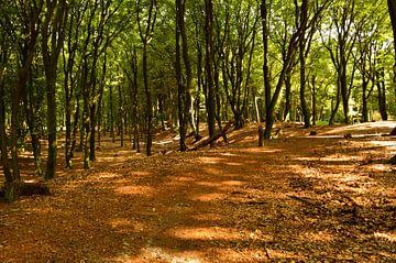 Eine sommerliche Waldlandschaft von Gerard de Zwaan