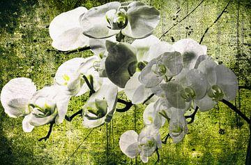 Orchideentraum von Christine Nöhmeier
