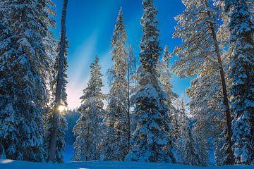 Zonsondergang in besneeuwd bos, Finland van Rietje Bulthuis