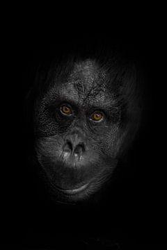 Visage d'orang-outan sympathique avec des yeux intelligents orange et une peau d'acier noir et blanc sur Michael Semenov