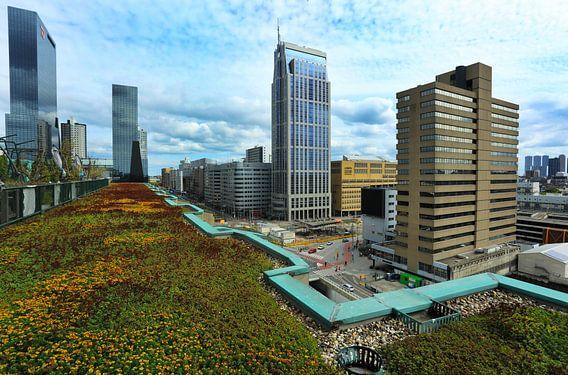 Groene daken in Rotterdam van Jacques van der Neut
